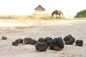 Horse Feces, Digestion, and Gut Health