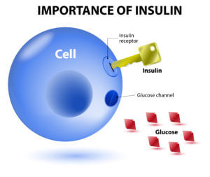 Insulin and Leptin Resistance in the Horse