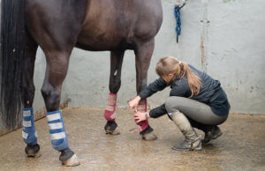 Inflammation and Recovery in the Horse