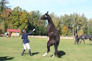 Anxiety Management in Thoroughbred Horse